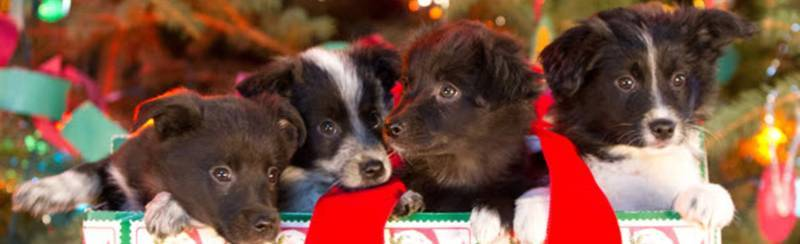 12 Dogs of Christmas: Great Puppy Rescue / 12 кучета за Коледа - да спасим кученцата (2012)